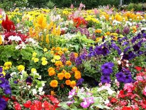 flower-garden-pretty